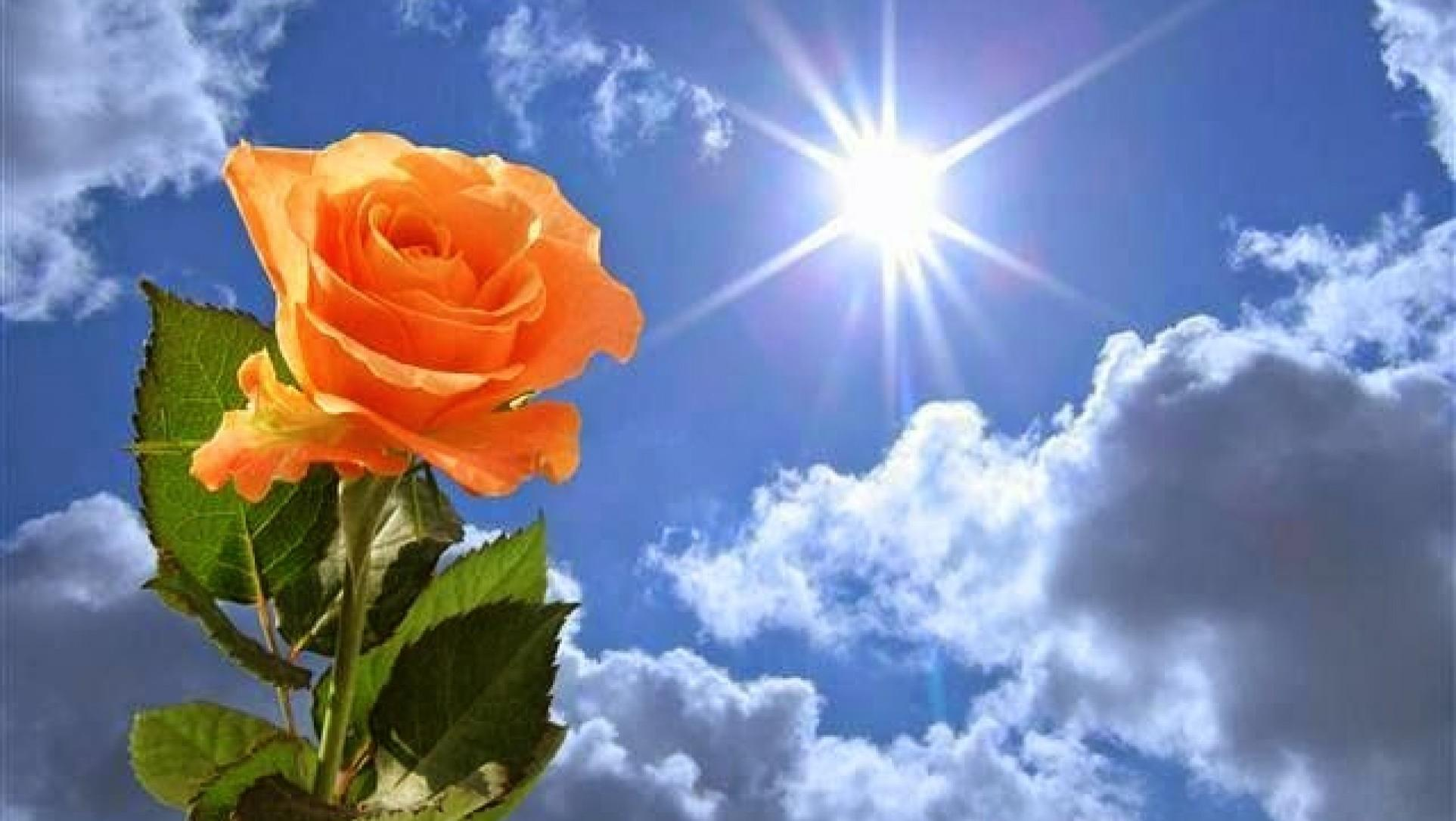 украшенные солнце светит для тебя картинки невероятные размеры, оставляли