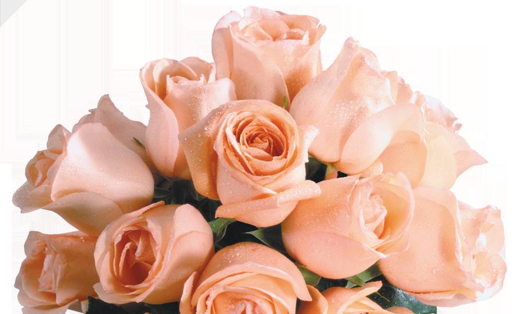 чайные розы букет фото и картинки большинства современных