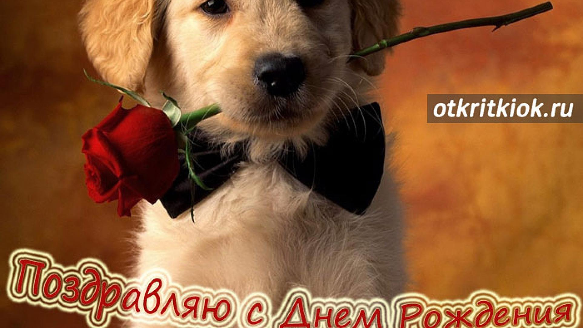 Открытки с днем рождения собаки картинки, имиджевая открытка